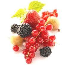 dieta,frutti di bosco,cervello,tossine,malattie degenerative